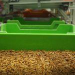 Unité démonstration Ynsite 4 Copyright Ynsect 150x150 - Cook Innov, dans le jura pour l'inauguration de la première unité de démonstration de production d'insectes !