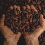 Cocoa 150x150 - La Colombie s'engage pour une production de cacao sans déforestation d'ici 2020