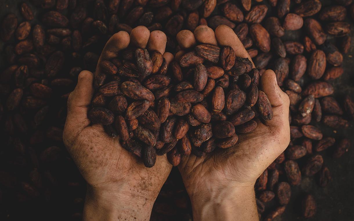 Cocoa - La Colombie s'engage pour une production de cacao sans déforestation d'ici 2020