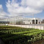 5r4a1365 150x150 - Des fermes urbaines autour des supermarchés