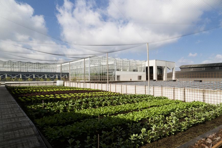 5r4a1365 - Des fermes urbaines autour des supermarchés