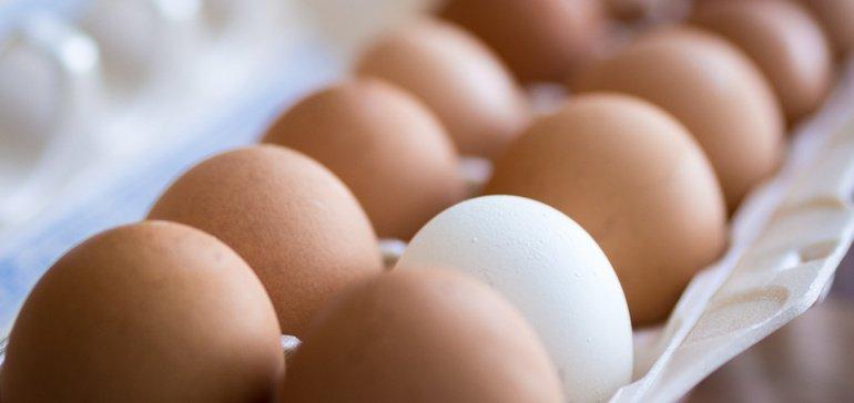 13fa621f54fe00297e7d0b7b9d5481bb - La vente d'oeufs des poules en liberté décolle aux Etas-Unis