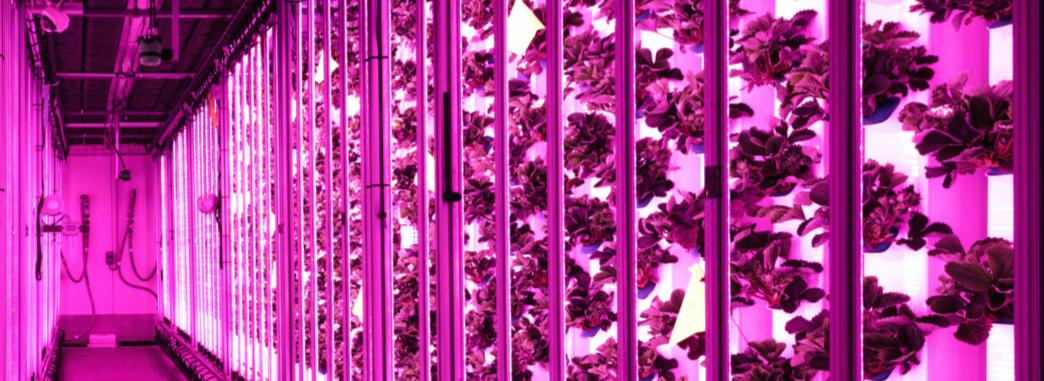 Capture d'écran 2018 12 04 à 10.35.18 - Agricool lève 25 millions d'euros pour développer l'agriculture au coeur des villes