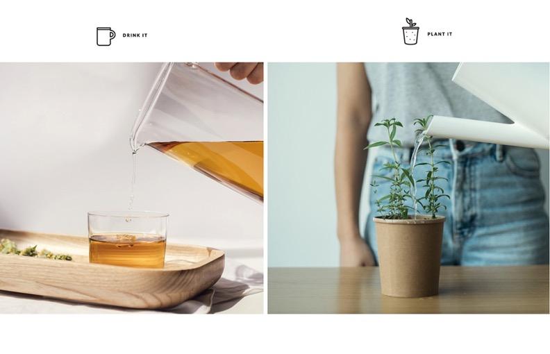 1 2 - Faire pousser son emballage de thé - Rhoeco