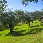 Capture d'écran 2019 02 08 à 08.14.30 150x150 - L'huile d'olive de France : vers un avenir radieux ?
