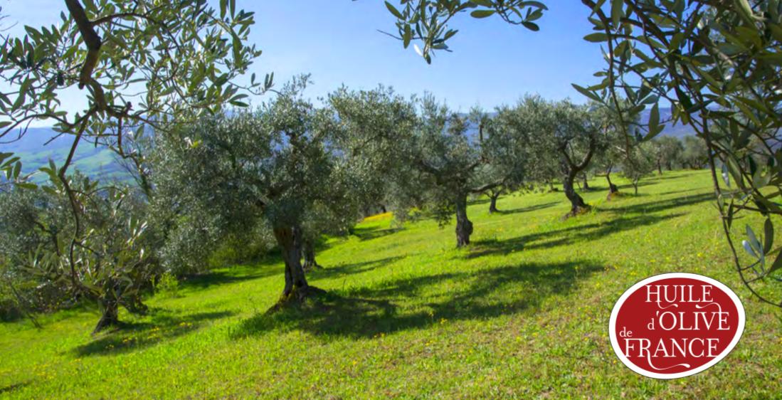 Capture d'écran 2019 02 08 à 08.14.30 - L'huile d'olive de France : vers un avenir radieux ?