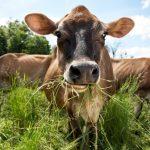 """pj bw233 grassm p 20140729174717 150x150 - Le nouveau mot-clé pour la consommation de viande de qualité : le """"Grass-Fed"""""""