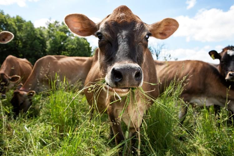 """pj bw233 grassm p 20140729174717 - Le nouveau mot-clé pour la consommation de viande de qualité : le """"Grass-Fed"""""""