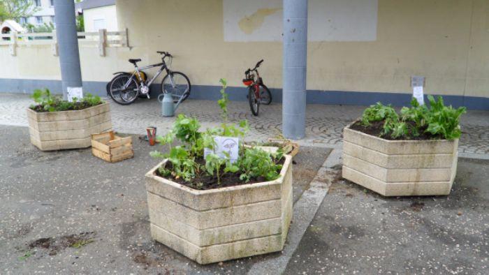 """incroyables comestibles potagers urbains legumes gratuits 2 1 - Les """"Incroyables comestibles"""", des potagers urbains en libre service"""