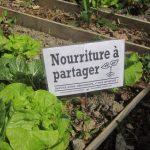 """incroyables comestibles potagers urbains legumes gratuits 7 1 150x150 - Les """"Incroyables comestibles"""", des potagers urbains en libre service"""