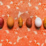 header 1500 150x150 - Motif Ingredients mise sur la biotechnologie pour le futur de l'alimentation