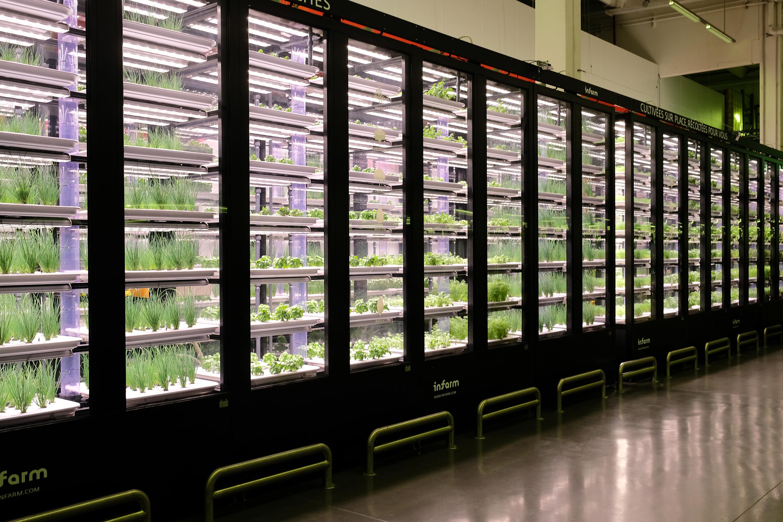 cMETRO armoire potager urbain - METRO France fête le premier anniversaire du plus grand potager urbain indoor d'Europe.