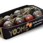 3 150x150 - De nouvelles tomates pourpres