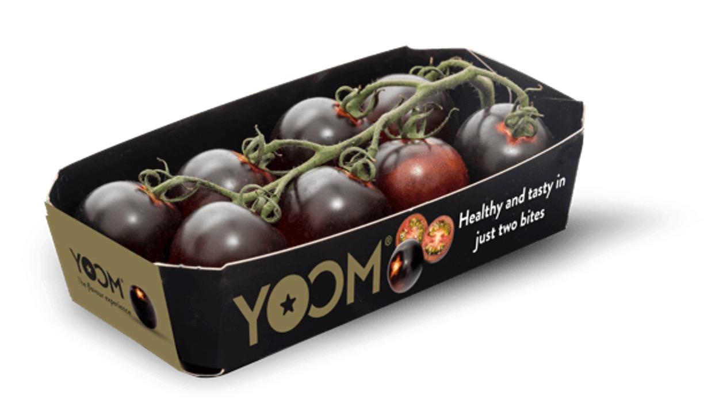 3 - De nouvelles tomates pourpres
