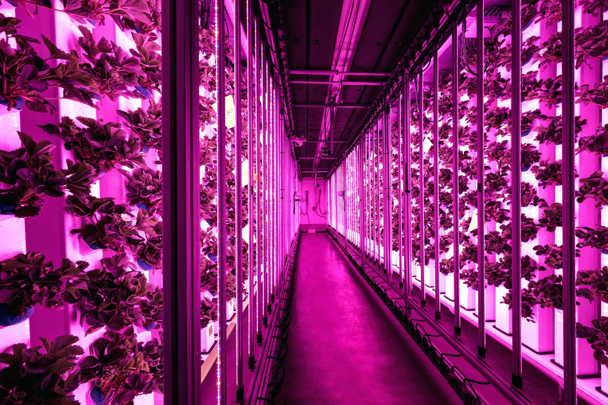 3PDuWOe3 - Agricool inaugure sa ferme urbaine pour cultiver fruits et légumes en ville