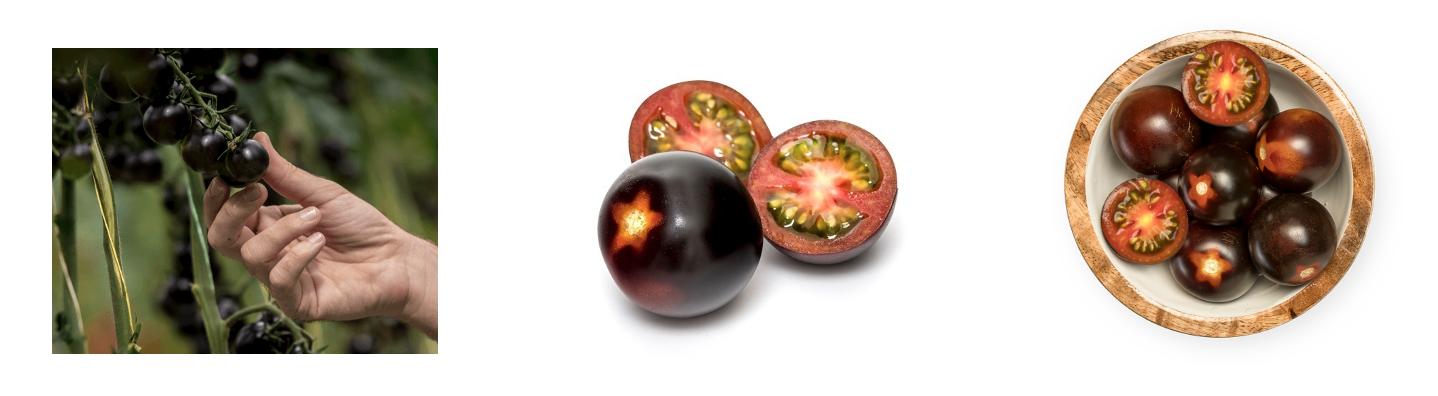 Capture d'écran 2020 02 07 à 09.55.30 - De nouvelles tomates pourpres