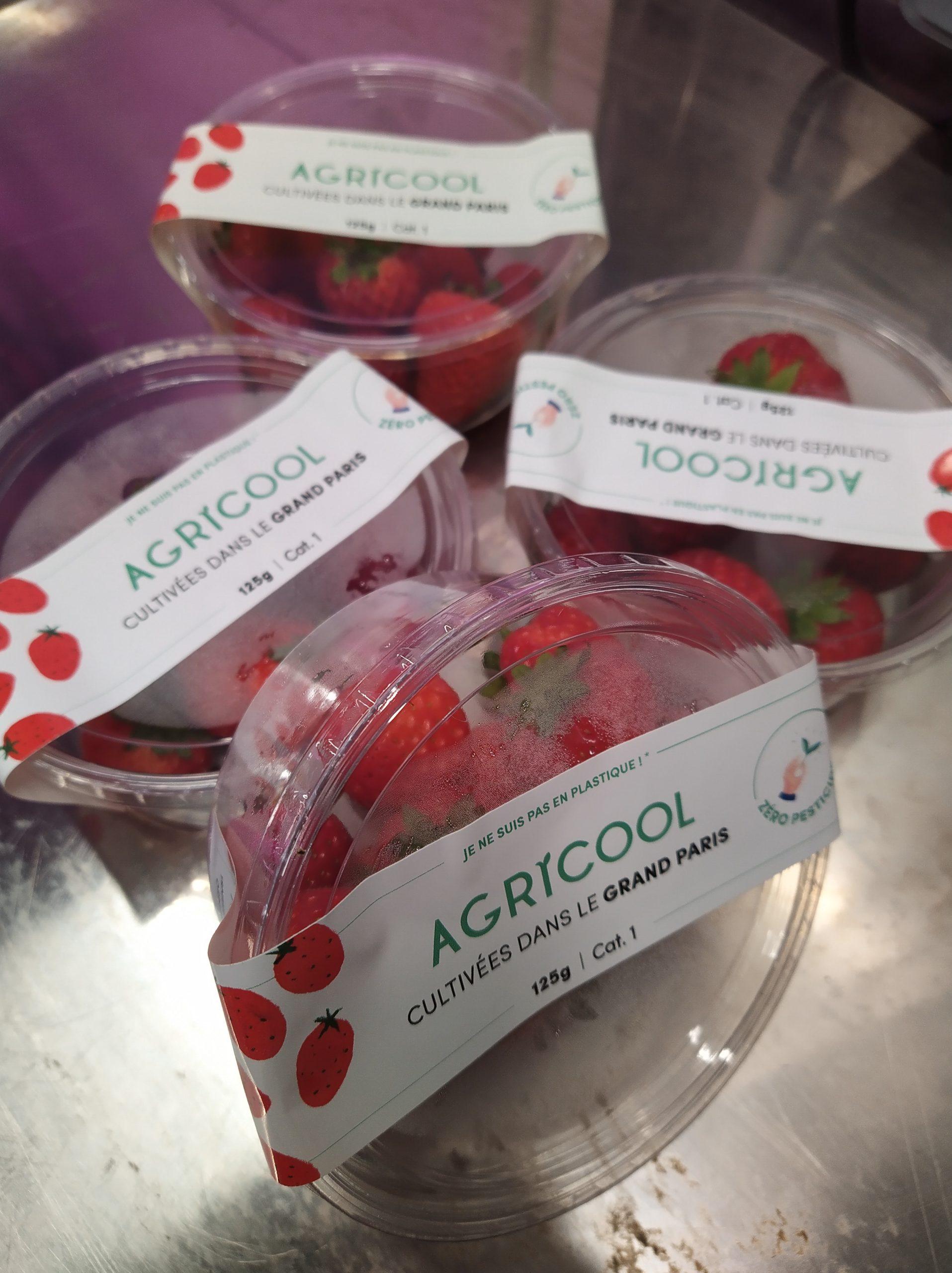IMG 20200211 103817 scaled - Agricool inaugure sa ferme urbaine pour cultiver fruits et légumes en ville