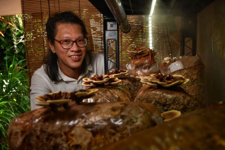 """st 20200307 lvlingzhimmaa 5502552 - Des champignons """"délocalisés"""" à Singapour"""