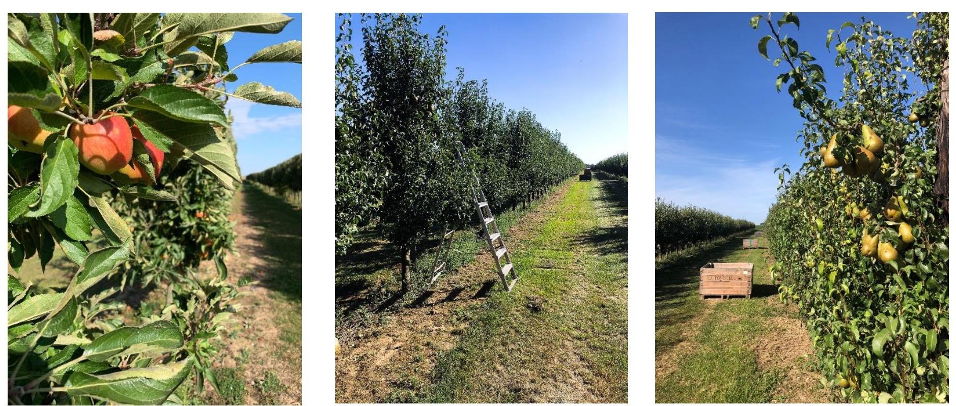 Capture d'écran 2020 04 29 à 10.49.38 - Paysan Vrac, cultivé, acheminé et vendu par le paysan en direct