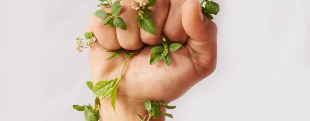 Sans titre 1 - Des plantes pour régénérer naturellement les sols agricoles