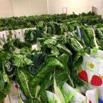 Capture d'ecran 2020 07 28 a 07.29.34 150x150 - Bio Culture : quand la livraison de légumes bios sauve des emplois