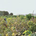 f4dff674 2f97 41c6 b1b5 656fc4d800f8 150x150 - Patagonia lance sa campagne sur l'agriculture biologique régénératrice