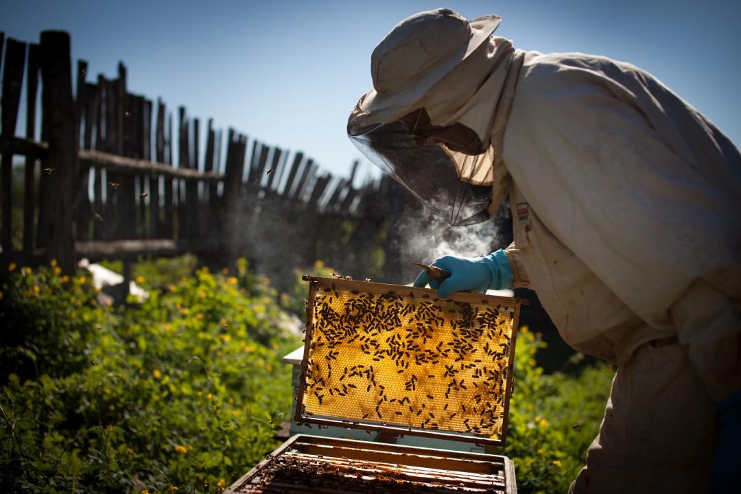 0 - Famille Michaud Apiculteurs, des miels d'excellence issus d'environnements préservés