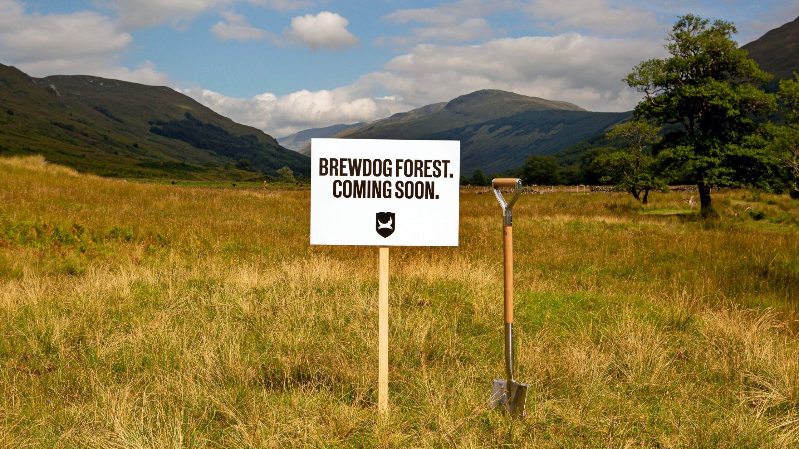 forest scaled - Brewdog : premier brasseur au monde neutre en carbone