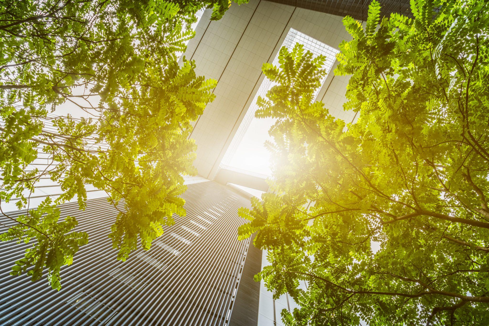 iStock 626394534 2048x1366 1 - végétaville, le média du végétal dans nos cités