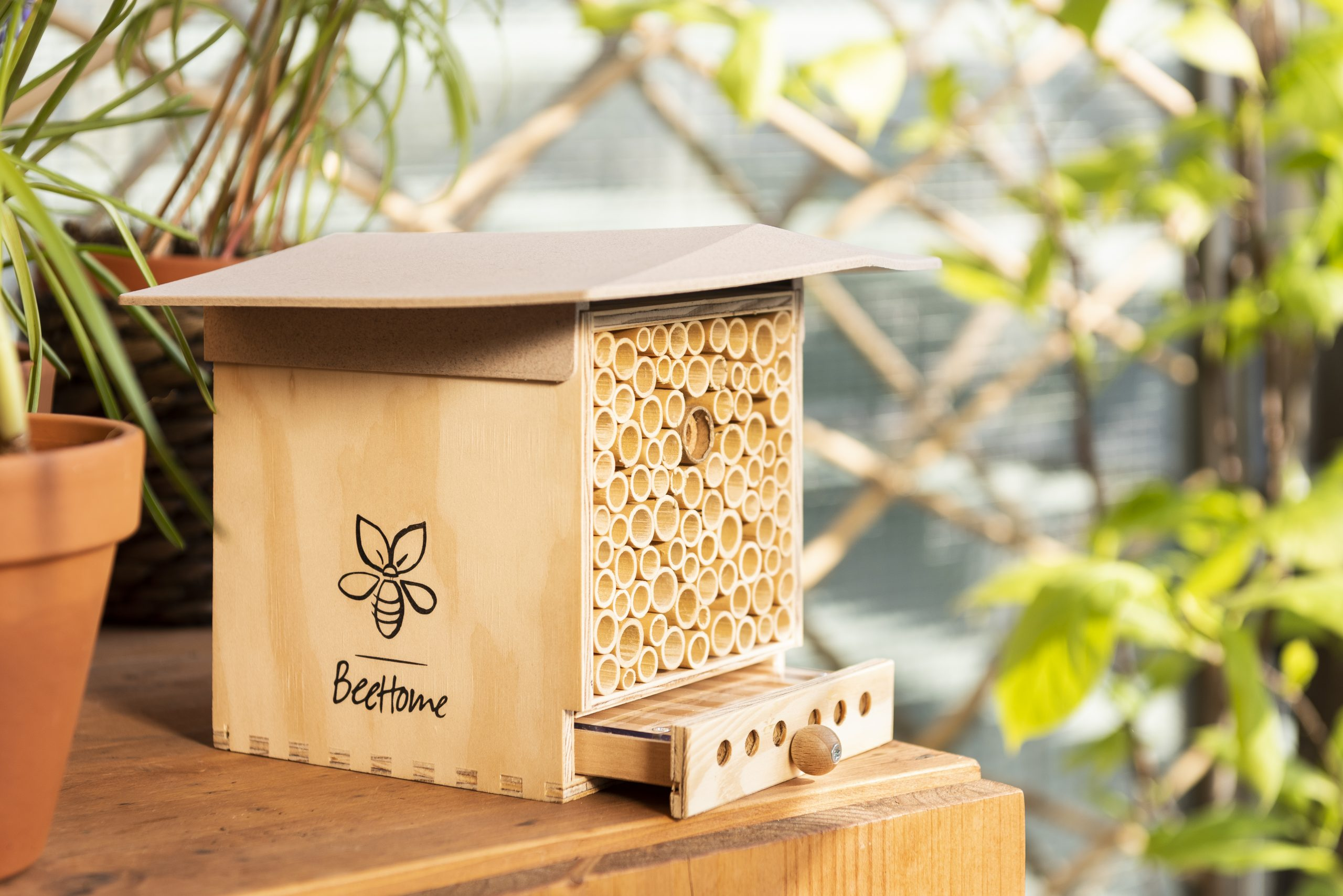 BeeHome Observer 03 1 scaled - Des maisonettes pour adopter des abeilles sauvages inoffensives
