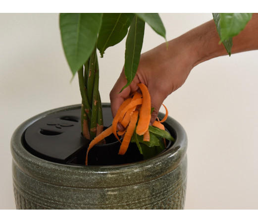 AquaCompot remplissage 1 - Faire pousser ses plantes avec des épluchures