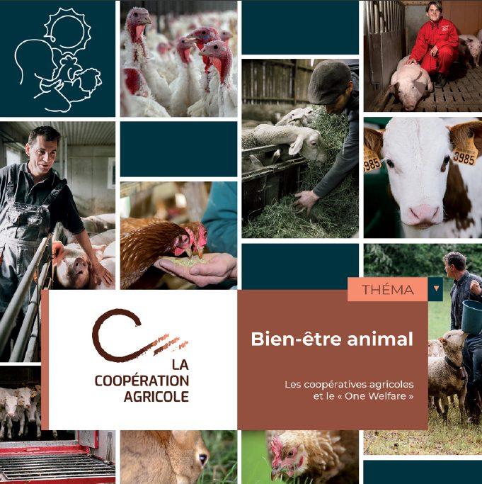 20210914 Tthema BEA Une 0 - Conférence de La Coopération Agricole « Alimentation des animaux : le bien-être commence dès l'auge »