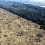 En Amazonie les terres deviennent inexploitables pendant des decennies 150x150 - Manger moins de viande pourrait sauver la planète