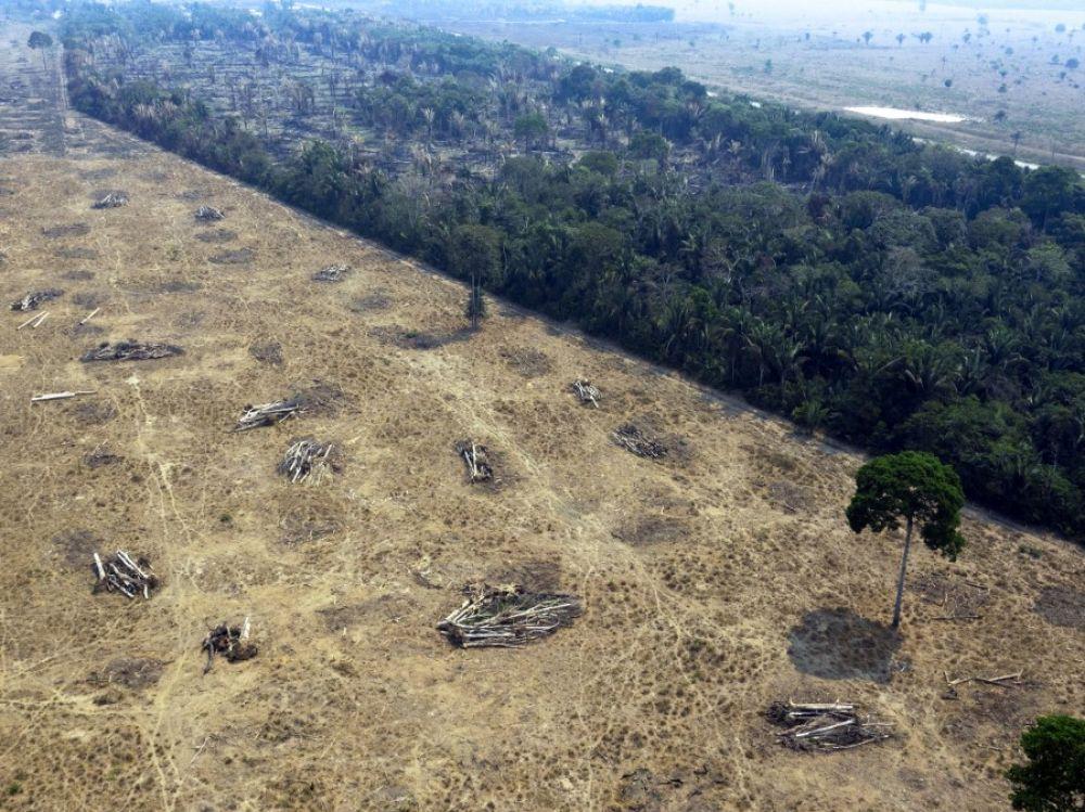 En Amazonie les terres deviennent inexploitables pendant des decennies - Manger moins de viande pourrait sauver la planète
